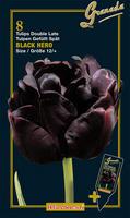 Tulipan późny pełny