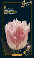 Tulipan Crispa