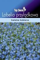 Lobelia przylądkowa