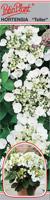 Hortensja ogrodowa biała