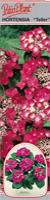 "Hortensja ogrodowa ""Teller"" czerwona"